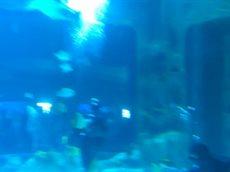 Акулы в Москвариуме.mp4