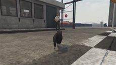 GTA 5 PS4 Cat Abuse