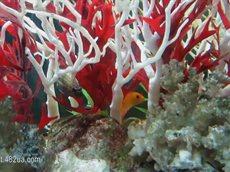 Любимые домашние питомцы, экзотические рыбки, коллекция аквариумов.flv